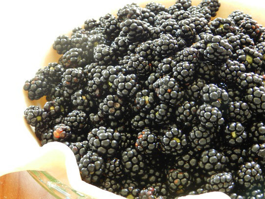 Blackberry and Mulberry