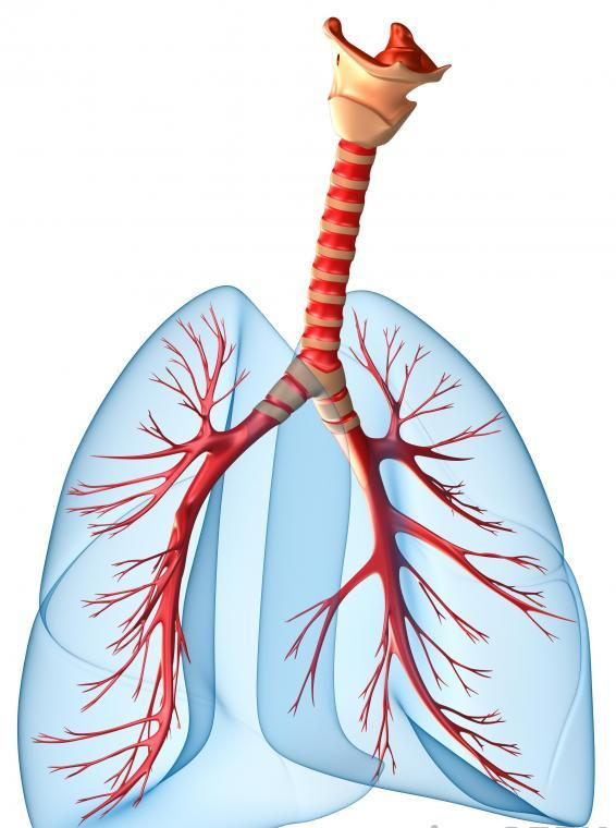 how to clear bronchial tubes