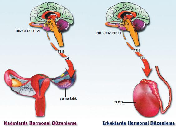 vitamins for testosterone deficiency