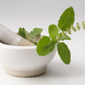 Difference Between Tulsi and Basil