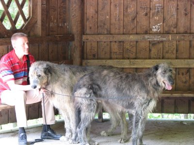 Difference between Irish wolfhound And Scottish Deerhound