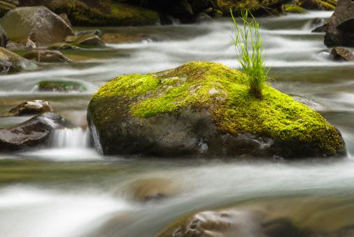 Rushing water in Sol Duc river