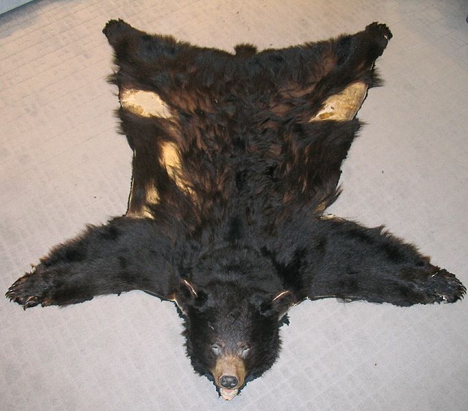 How Much Is A Bear Rug Designs