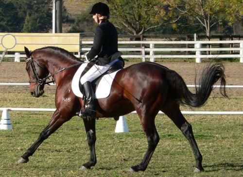 Cantering a horse
