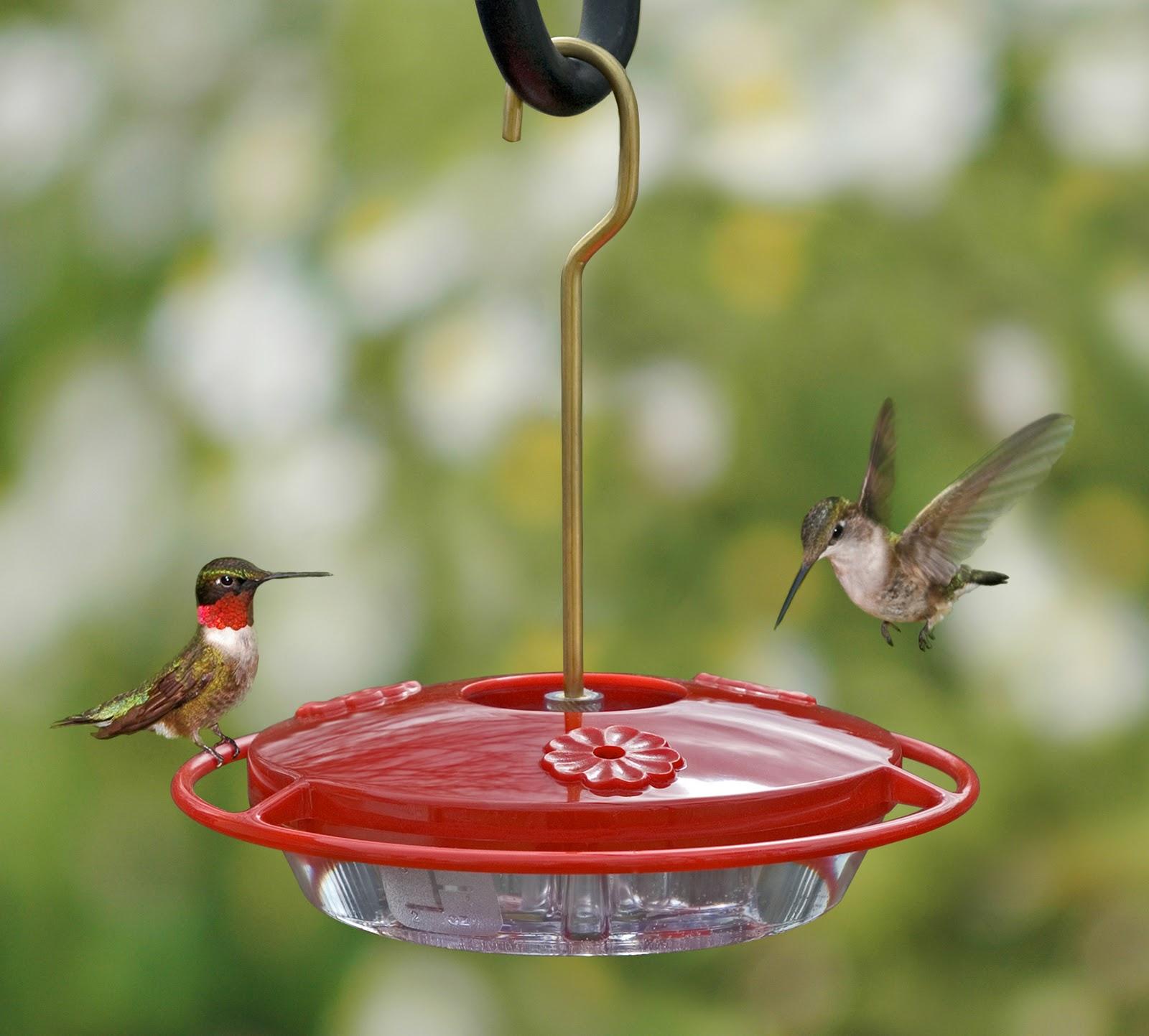 Clean a Hummingbird Feeder