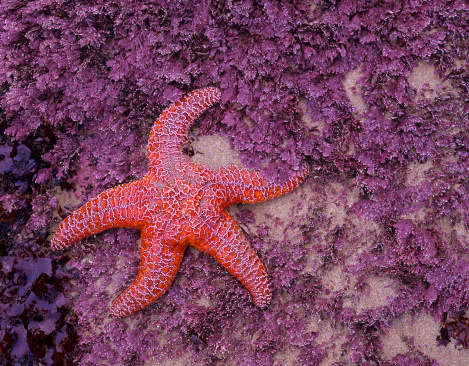Find Starfish at the Beach
