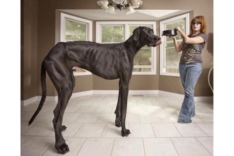 World Record holding dog