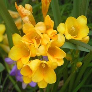 Grow Exotic Flower Bulbs