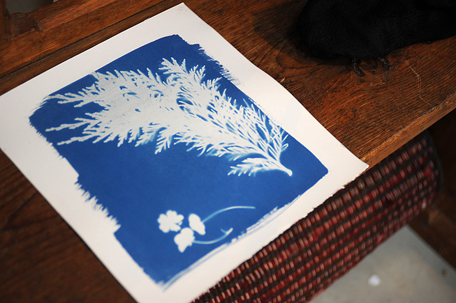 How to Make a Cyanotype