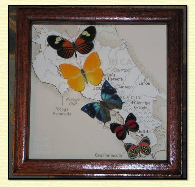 Butterfly in a Shadow Box