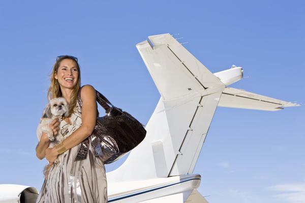 Prepare a Pet for Air Travel