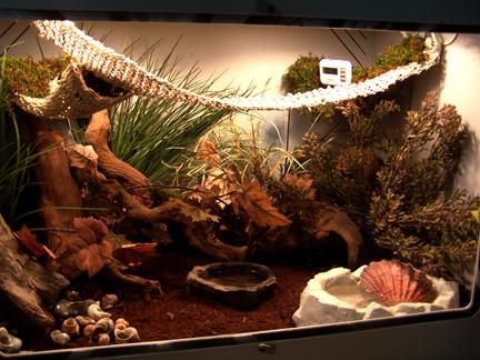 How to Set up a Hermit Crab Habitat