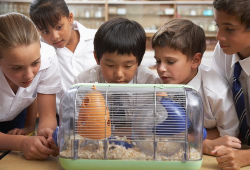 How to Teach a Child to Care for Rodents