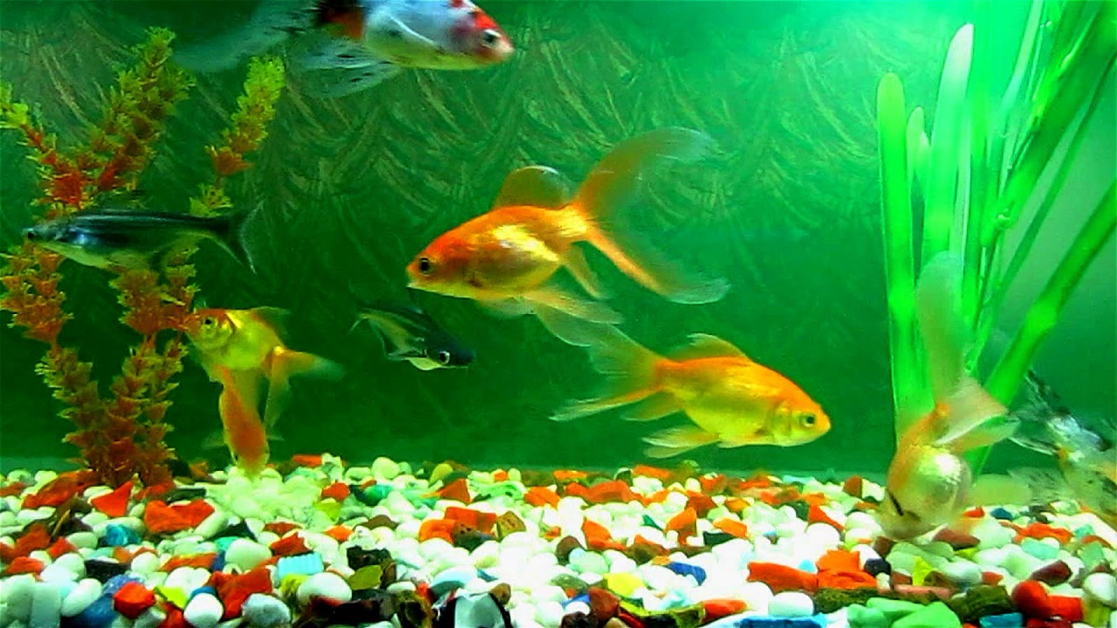 How to test aquarium water ph for How to lower ph in fish tank
