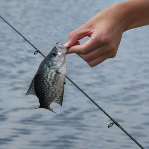 Unhook a Fish