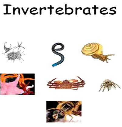information about vertebrates and invertebrates Vertebrates & invertebrates interactive presentation designed by mr phillips july 2004.