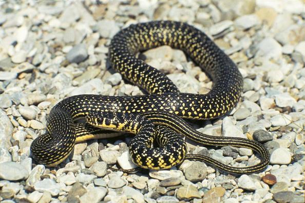 Top 10 Deadliest Snakes