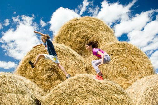 What Is Hay Made Out Of