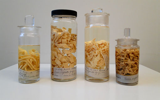 Difference Between Tapeworm and Roundworm