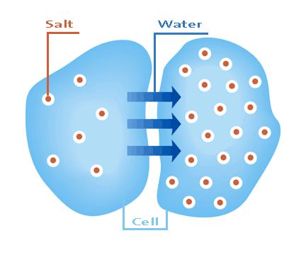 osmosis and salt concentration The effect of feed ionic strength on salt passage through reverse osmosis membranes  that salt passage through a reverse osmosis  concentration of salt on the.