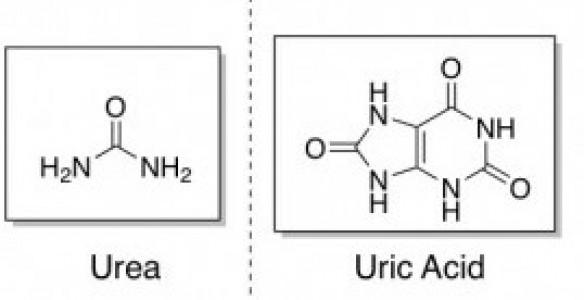 Urea and Uric Acid