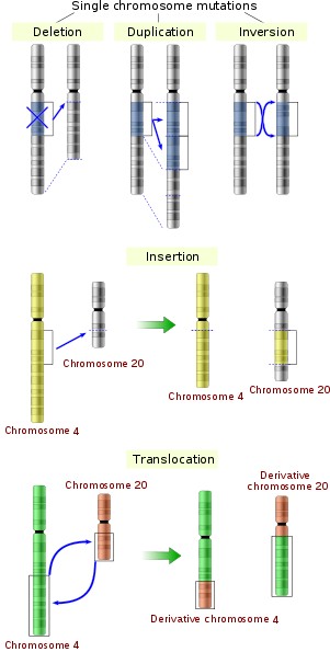 Difference between Gene Mutation and Chromosome Mutation