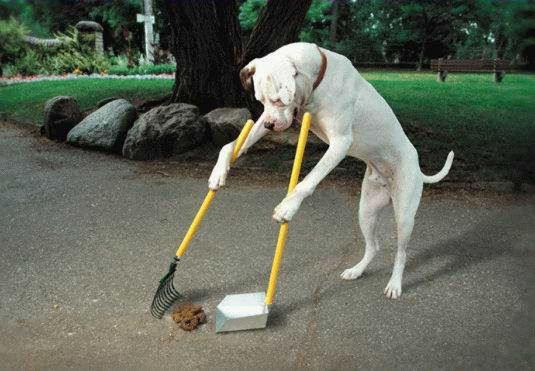 Tips to Choose a Dog Pooper Scooper Service Company
