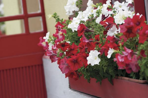 Eye-Catching Window Box