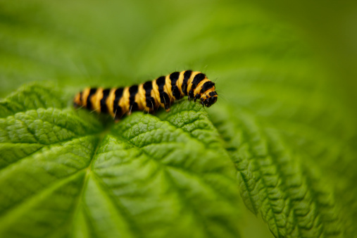 Bugs Away From Plants Organically