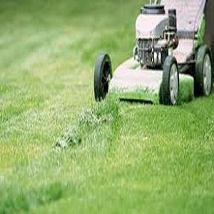Nurture Centipede Grass
