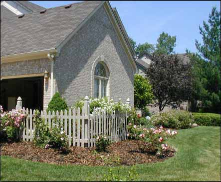 Rose Bushes for a Landscape