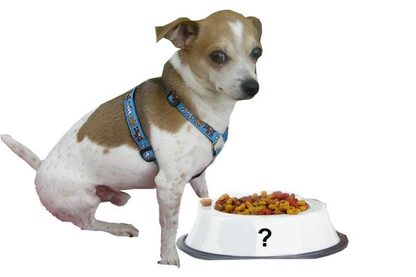 Pet with Food
