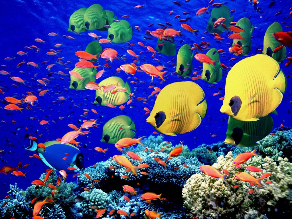 Top 10 most beautiful fishes in the world for Best fishing in the world