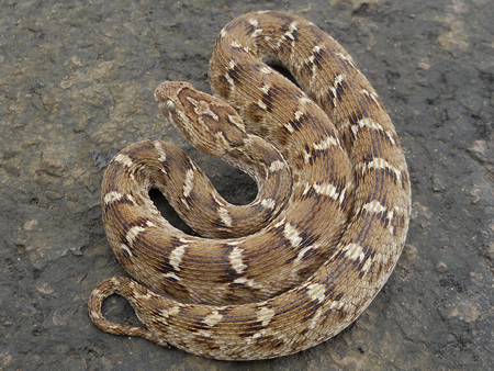 Top 10 Most Poisonous Snakes in the World