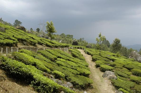 Top 10 Must Visit Places In Kerala