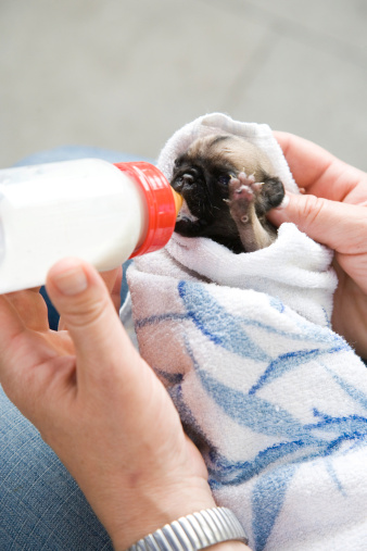 How To Bottle Feed Puppies