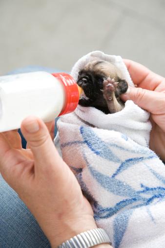 Bottle Feeding Puppy