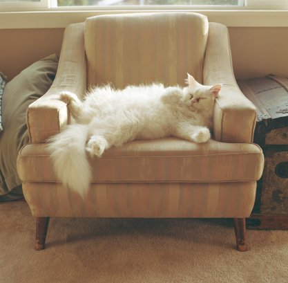 cat armchair