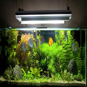 How to clean a small fish tank for How to clean a fish tank