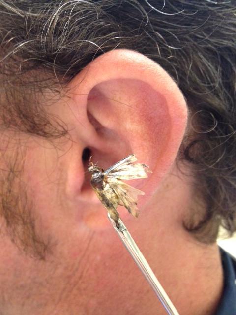 Bug in Ear