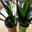 How to Propagate a Snake Plant