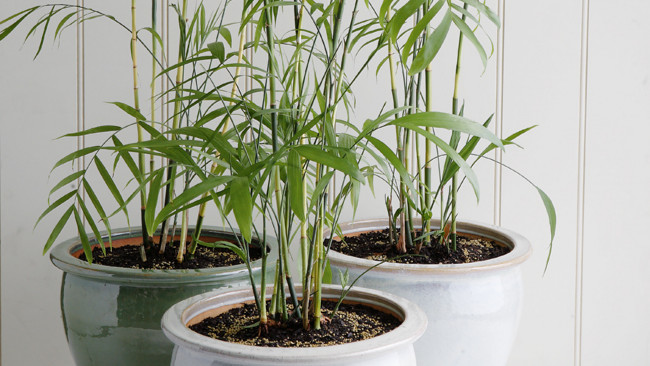 Plant into a Bigger Pot