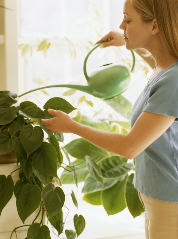 Water Houseplants While On Vacation