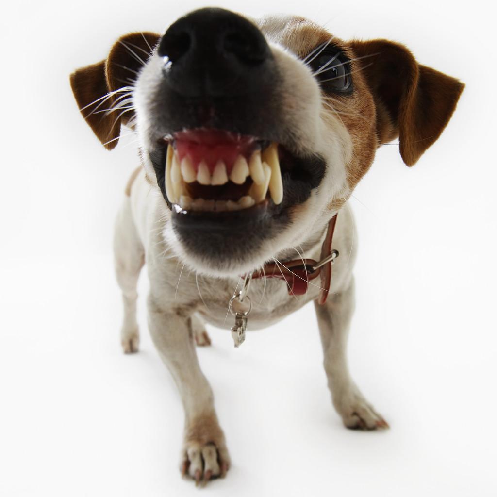 Dog's aggression