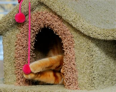 How to Build a Cat Condo at Home