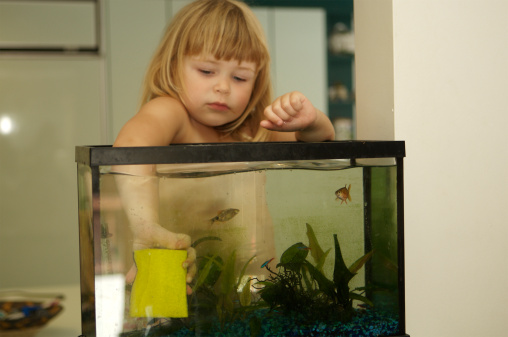 How to Change Water in a Fish Tank