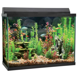 How to Clean a Tropical Fish Tank