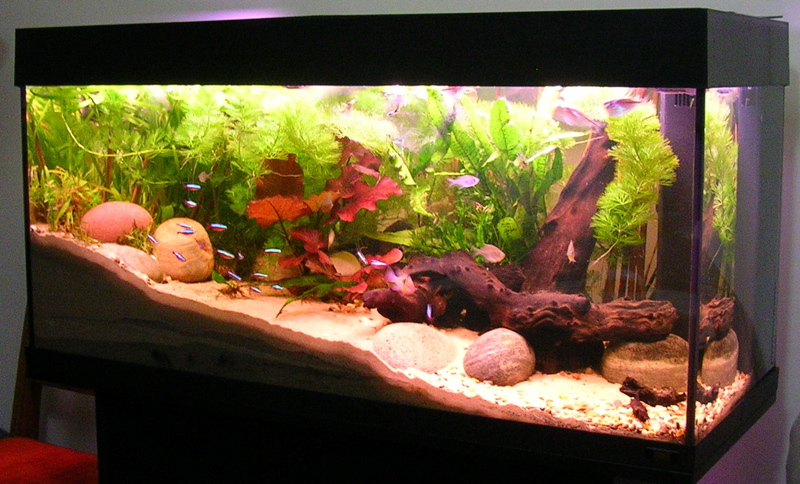 How to Start a Freshwater Aquarium the Right Way