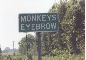 Monkeys Eyebrows
