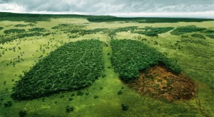deforestation in africa